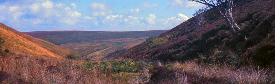 Walking holidays in Exmoor, North Devon