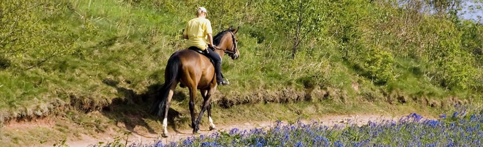 Riding holidays in Exmoor, North Devon